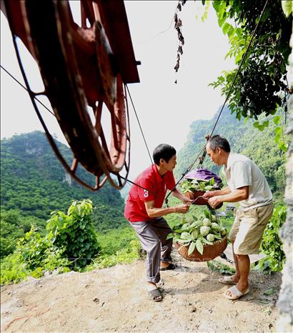 Photo: Custard apples are transported on hand-made ropeways from mountains to markets. VNA Photo: Vũ Sinh