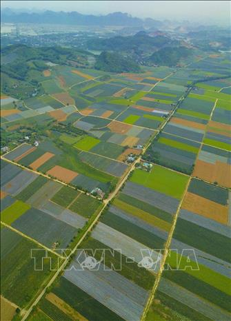 Photo: Pineapple fields in the Dong Giao farm create a colourful picture. VNA Photo: Minh Đức