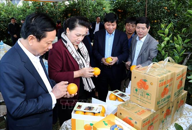 Photo: NA Chairwoman Nguyen Thi Kim Ngan visits the citrus plantation in Tay Phong commune, Cao Phong district. VNA Photo: Trọng Đức