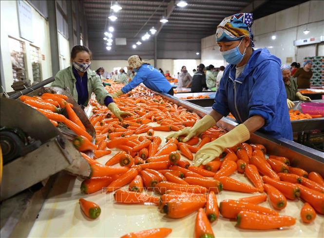 Tìm cơ hội cho đầu ra nông sản các tỉnh phía Nam